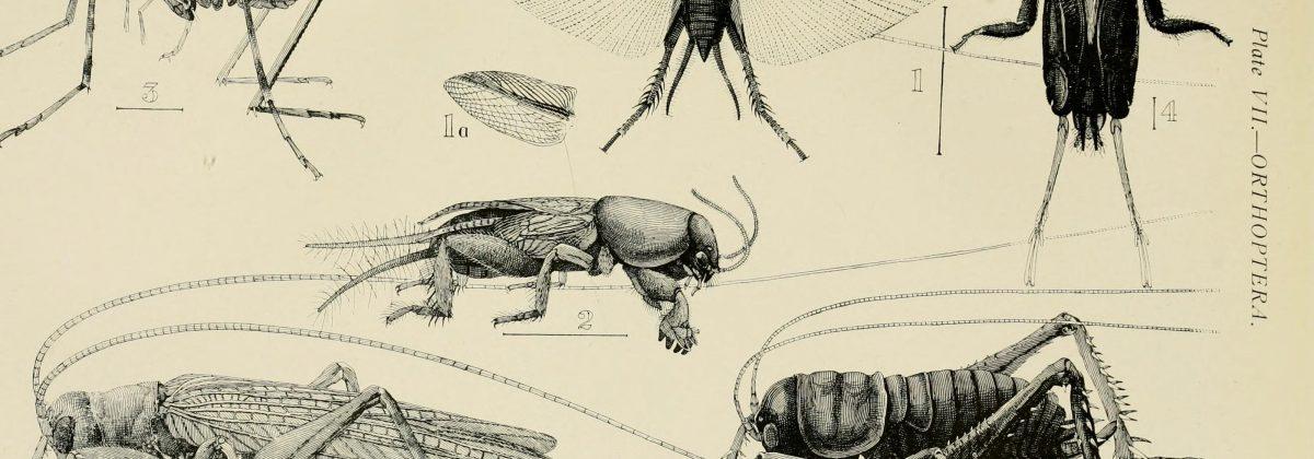 Oude tekening insecten