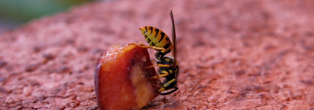 Duitse wesp op fruit