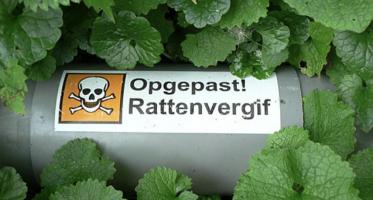 Rattenvergif