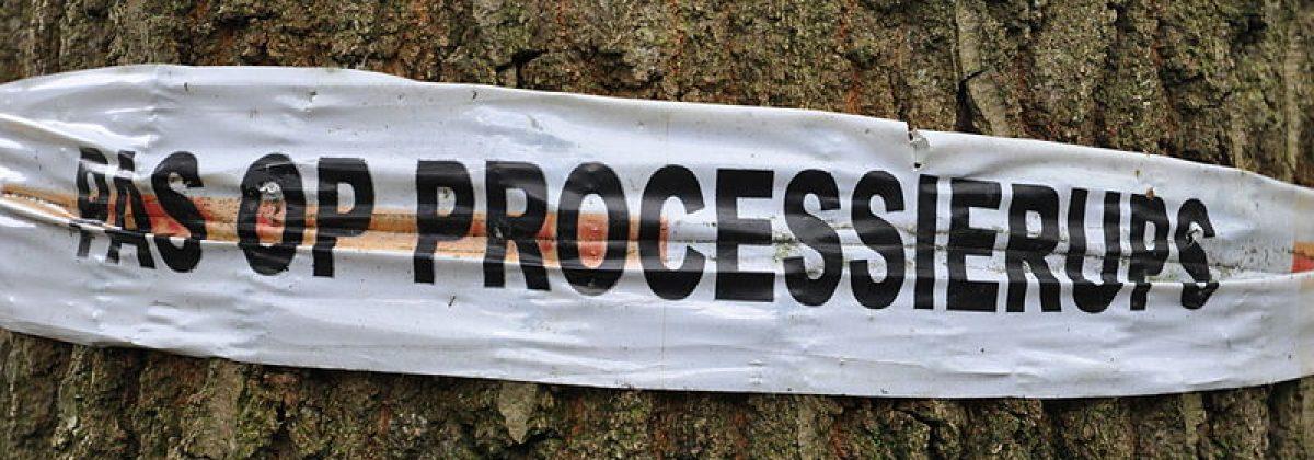800px-Pas_op_processierups