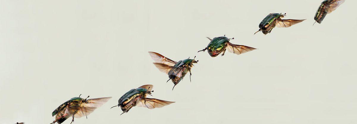 Vliegende insecten